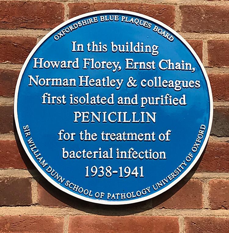 penicillin_plaque